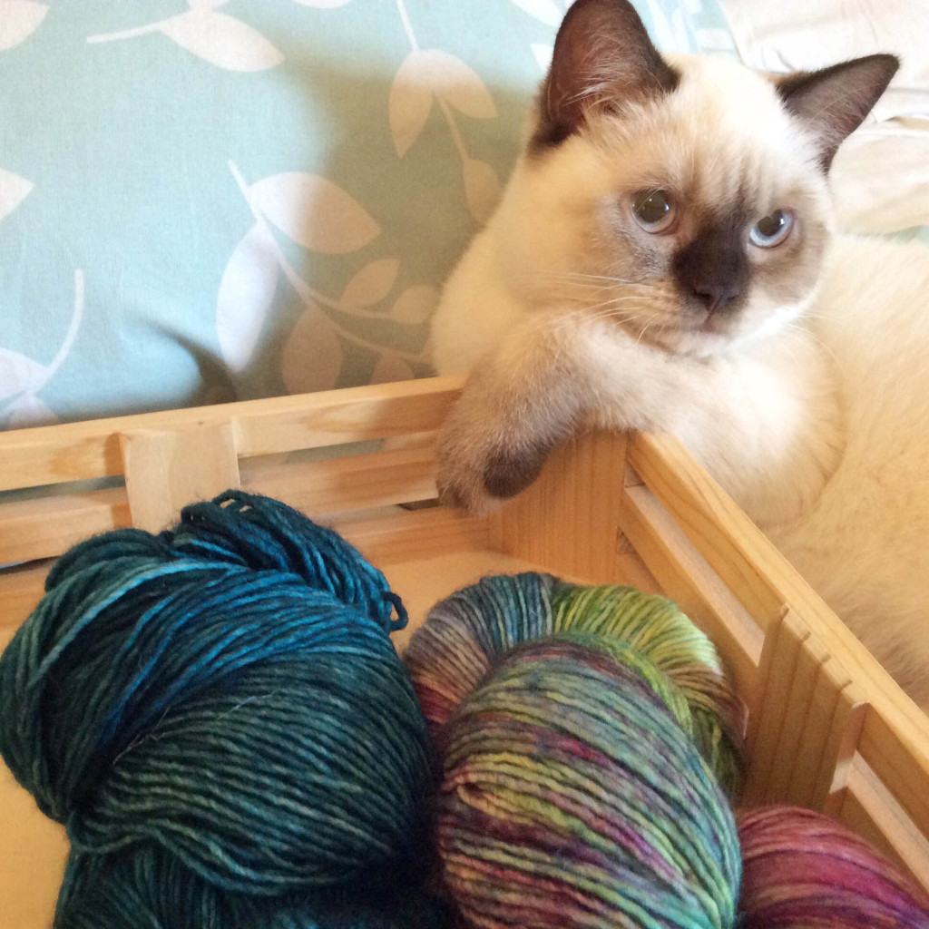 Malabrigo and Mochi kitten